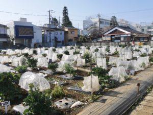 シェア畑 有機栽培